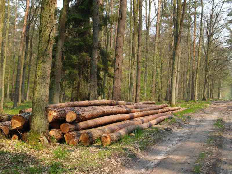 Tartak Strzelno - drewno
